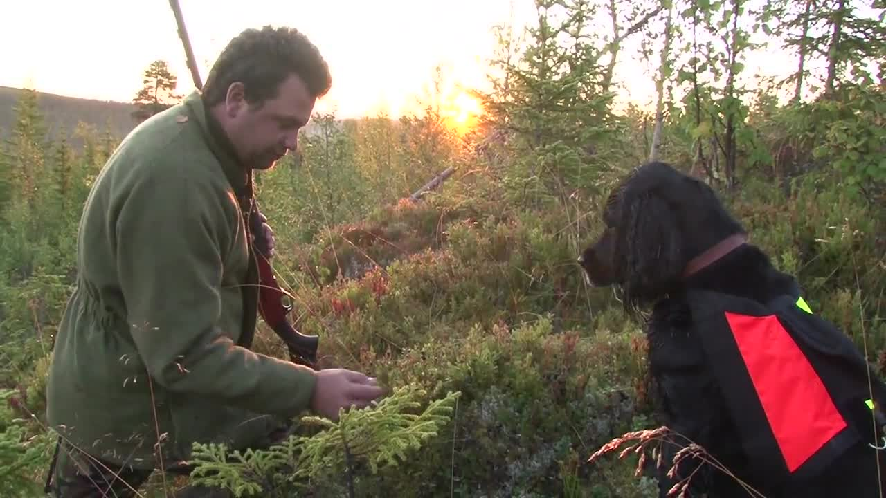Mark Gilchrist hunting capercaillie and black grouse