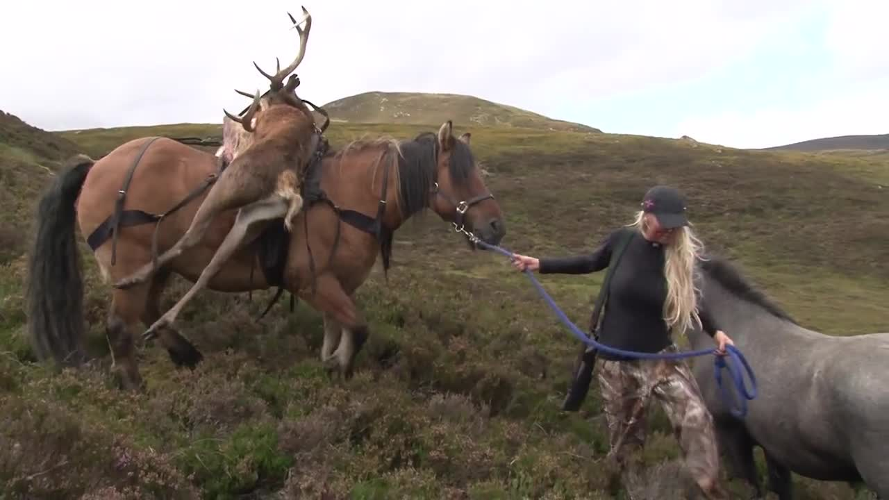 Rachel Carrie hunting red stags