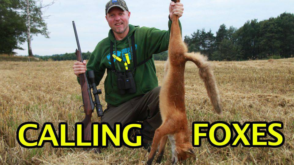 Calling foxes 2015/16 with Kristoffer Clausen