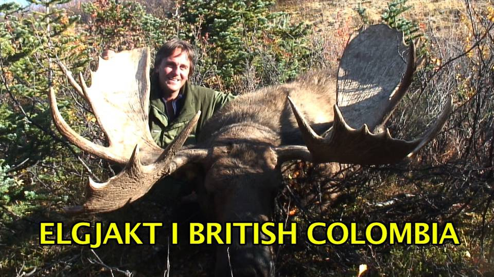 Elgjakt i British Colombia