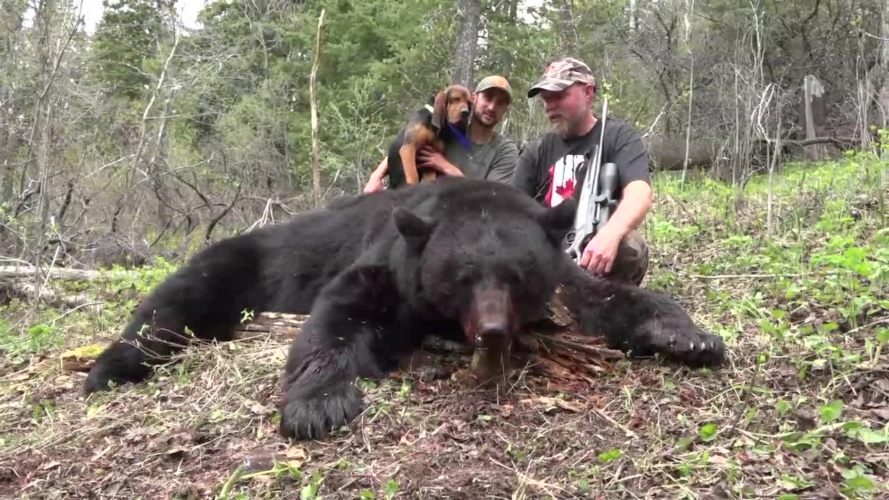 Hunting bears with Kristoffer Clausen